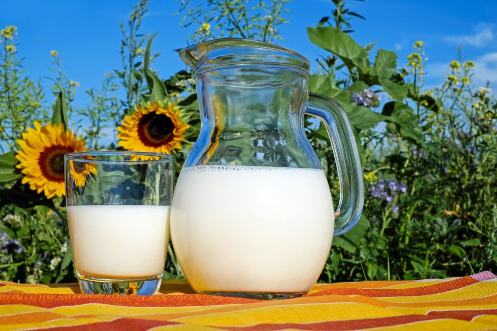 A pitcher and glass of milk sitting on a fall-colored picnic blanket in front of sunflowers on a clear day.