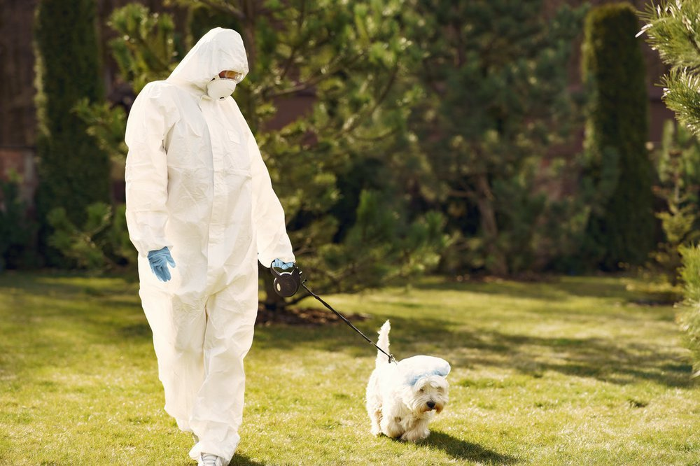 A person wearing PPE walking their dog.